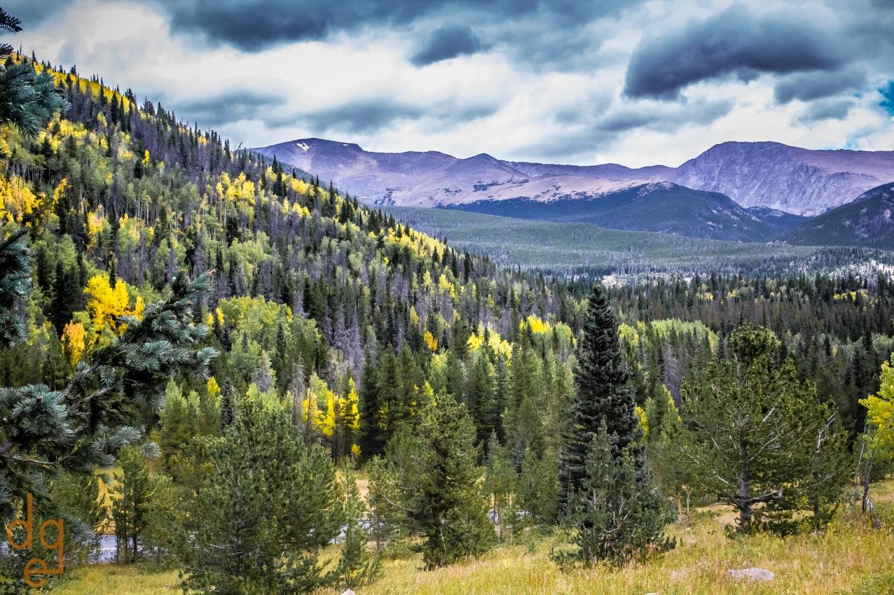 Aspens in the Rockies