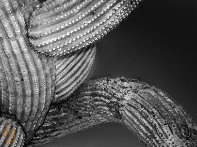 Saguaro Abstract 13