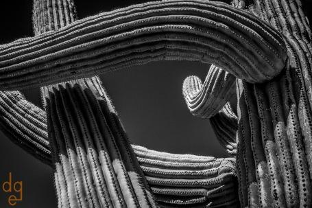 Saguaro Abstract 15