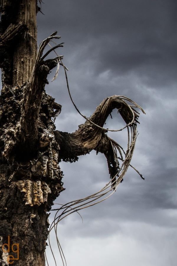 Saguaro Abstract 2