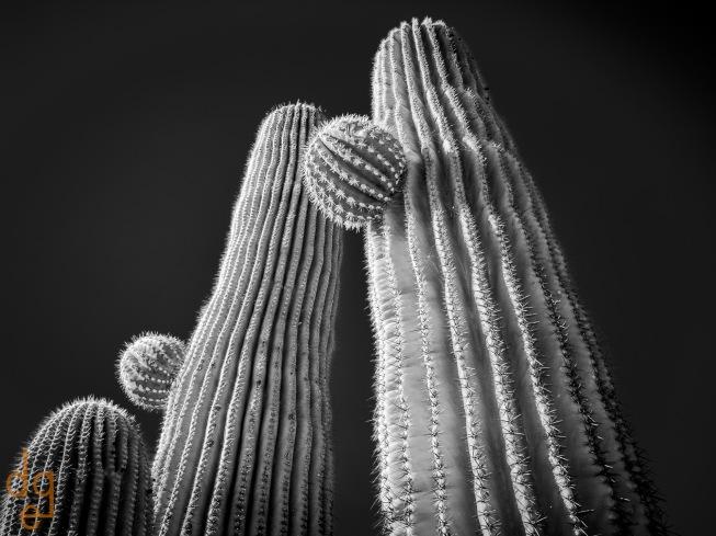 Saguaro Abstract 25