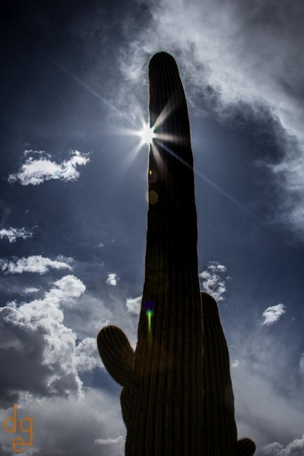 Saguaro and Sun