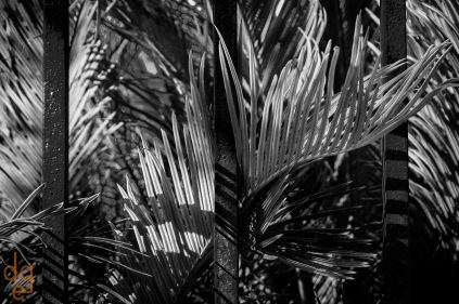 Sego Palm and Wrought Iron