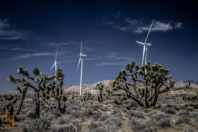 Windmills and Joshua Trees